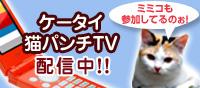 ケータイ猫パンチTV 配信中!